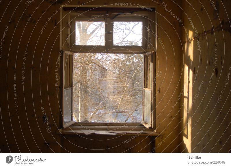 offenes Fenster Baum Ruine Mauer Wand Fensterrahmen Beton Holz Glas alt ästhetisch historisch kaputt gold Hoffnung Sehnsucht Vergänglichkeit Fensterscheibe Netz