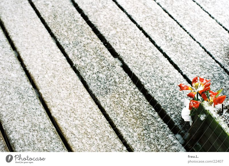 Frühlingsanfang Blume Schnee Holz Linie Häusliches Leben Balkon Tulpe März Blumentopf Blumenkasten