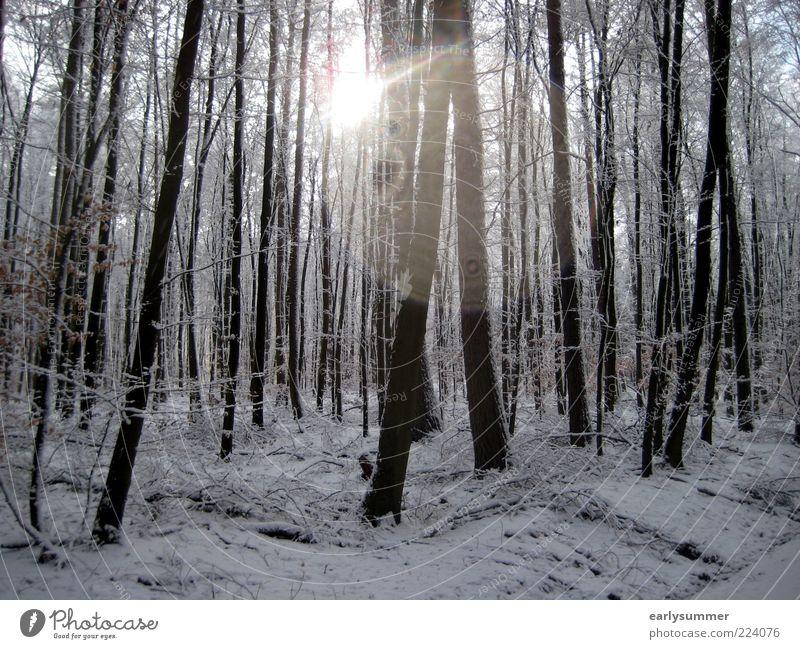 Winter Natur kalt trist silber weiß Wald Baum Geäst Pflanze Sonne Dezember Winterurlaub Wetter Landschaft Lichtspiel Baumstamm Wallpaper Farbfoto