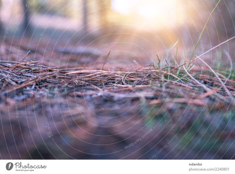 Landschaft im Wald Natur Sonne gelb Herbst Gras grau hell Erde