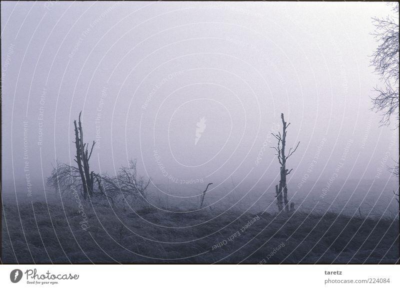 Baumgrenze Natur Winter ruhig Einsamkeit kalt Wiese Tod Herbst Landschaft Gras Umwelt Nebel trist bedrohlich Vergänglichkeit außergewöhnlich