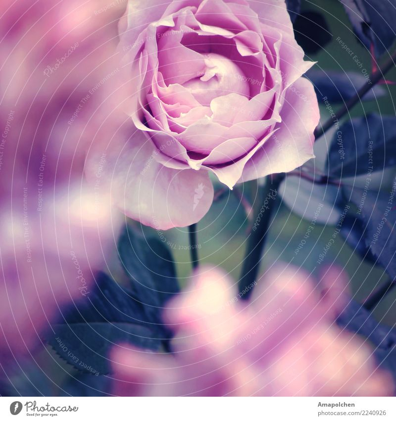 :18-03:: elegant Seniorenpflege Alternativmedizin Gesunde Ernährung Wellness Leben harmonisch Wohlgefühl Zufriedenheit Erholung ruhig Meditation Duft