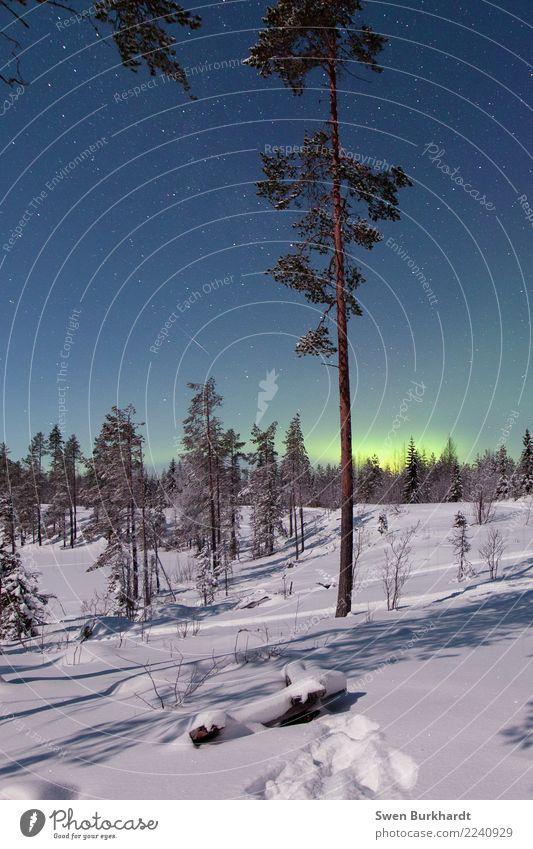 Es leuchtet soooo schön grün Himmel Ferien & Urlaub & Reisen Weihnachten & Advent Pflanze blau Landschaft Baum ruhig Winter Berge u. Gebirge Umwelt kalt Schnee