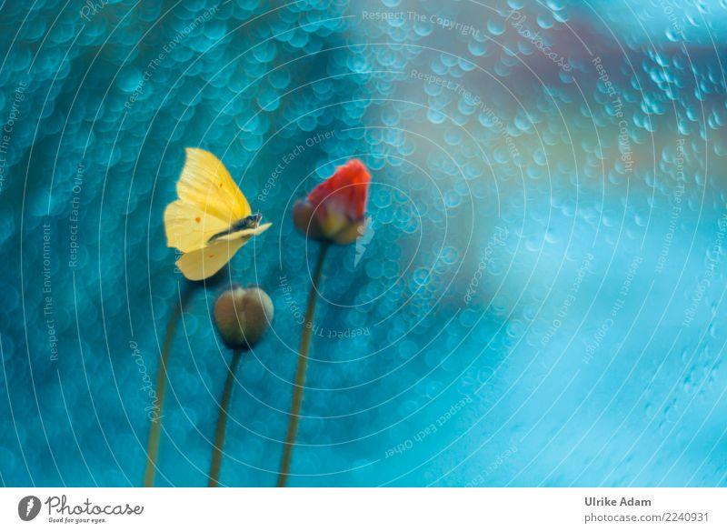 Fliegender Zitronenfalter Natur Pflanze blau Sommer Blume Tier ruhig Leben gelb Herbst Blüte Innenarchitektur fliegen Design Dekoration & Verzierung glänzend