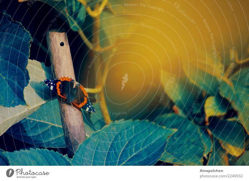 ::18-16:: Natur Ferien & Urlaub & Reisen Pflanze Sommer Landschaft Blume Erholung Blatt ruhig Ferne Wald Umwelt Gesundheit Herbst Frühling Wiese