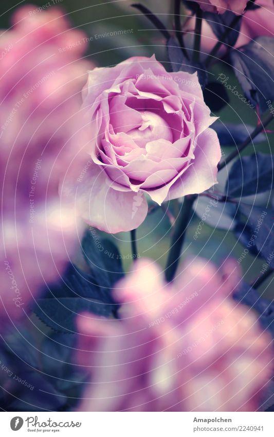 ::18-14:: Wellness Leben harmonisch Wohlgefühl Zufriedenheit Sinnesorgane Erholung ruhig Duft Valentinstag Muttertag Ostern Hochzeit Geburtstag Trauerfeier