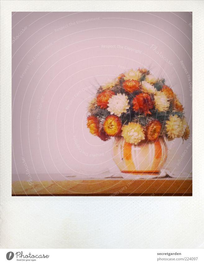 verewigt. schön Pflanze rot Blume gelb braun ästhetisch Tisch retro Romantik Dekoration & Verzierung Vergänglichkeit trocken analog Möbel Blumenstrauß