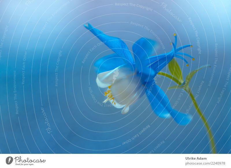 Blue dream Design Leben harmonisch Wohlgefühl Zufriedenheit Erholung ruhig Meditation einrichten Dekoration & Verzierung Tapete Bild Valentinstag Muttertag
