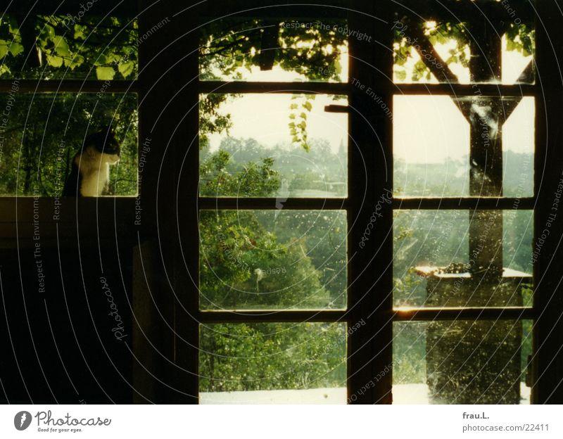 Idylle in Frankreich Veranda Fenster Baum Katze grün Sommer Ferien & Urlaub & Reisen Romantik Geborgenheit ruhig Südfrankreich Wohnzimmer Säugetier Wein Regen