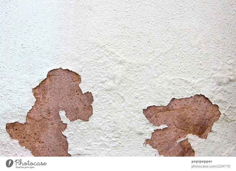 Hundetratsch weiß Tier Wand Mauer lustig braun Fassade Tierpaar kaputt Haustier Comic Witz verwittert abblättern Umrisslinie Comicfigur