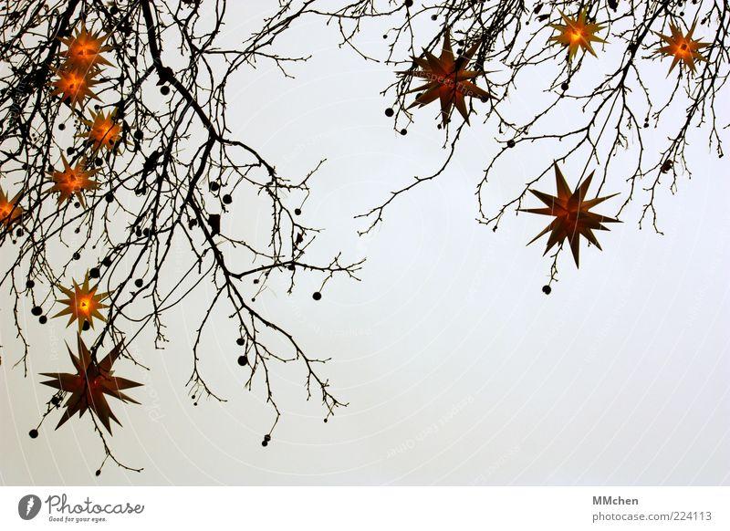Sternenkunde Himmel Natur Weihnachten & Advent Baum ruhig Winter dunkel kalt gelb grau Feste & Feiern Nebel leuchten Dekoration & Verzierung Romantik