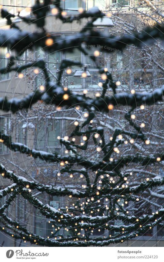 Starlights Weihnachten & Advent grün ruhig Hoffnung Dekoration & Verzierung Frieden Wunsch Zeichen Glühbirne Vorfreude Weihnachtsstern Lichterkette Abend Menschlichkeit
