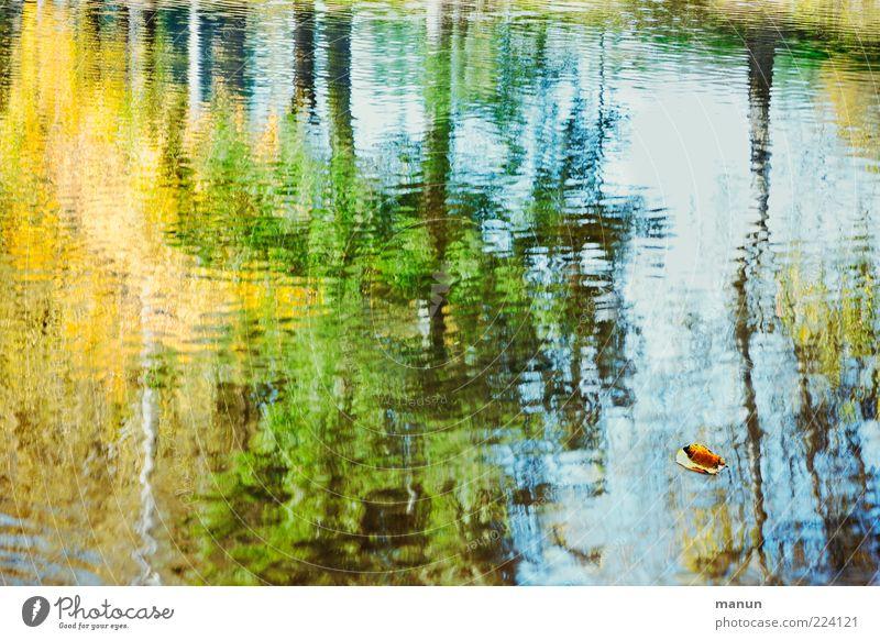 Herbstspiegel Natur Wasser Baum Blatt Wald Seeufer authentisch fantastisch nass natürlich Idylle Vergänglichkeit Wandel & Veränderung Wasseroberfläche