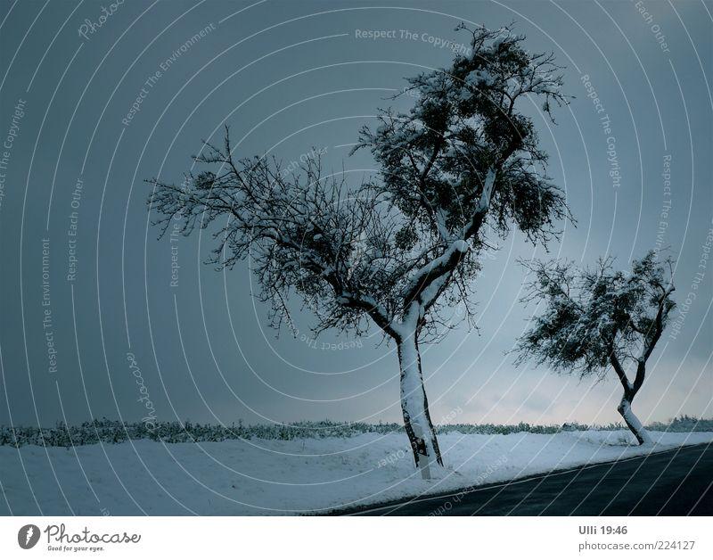 Landstraße im Nirgendwo (Und die Nr. 50............) Natur Baum blau Winter ruhig kalt dunkel Schnee Landschaft grau Stimmung Eis Horizont ästhetisch trist Frost