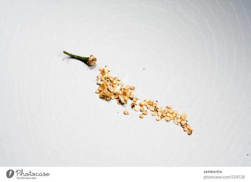 Paprika Ernährung Lebensmittel trocken Teile u. Stücke Kräuter & Gewürze Scharfer Geschmack Stengel Korn Bioprodukte getrocknet Chili Paprika Nahaufnahme Gemüse Küchenkräuter Vor hellem Hintergrund