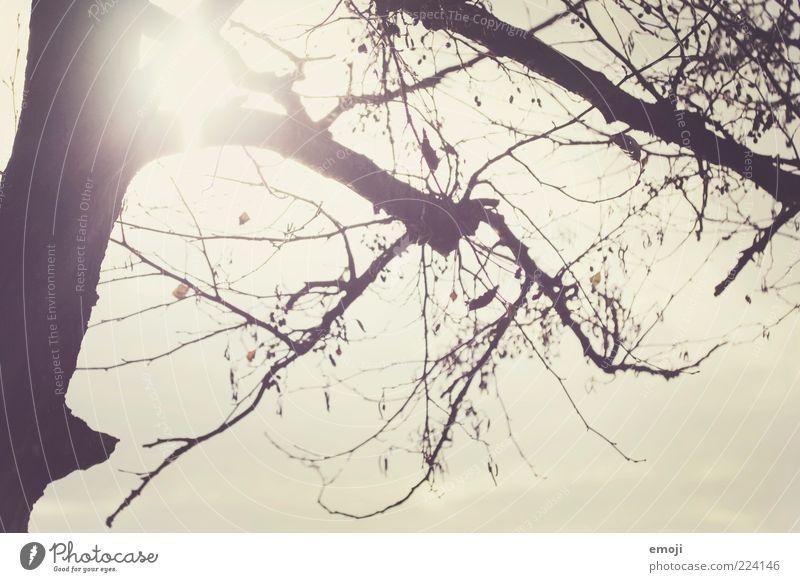 Wintersonne Himmel Baum Sonne Ast leuchten kahl Natur