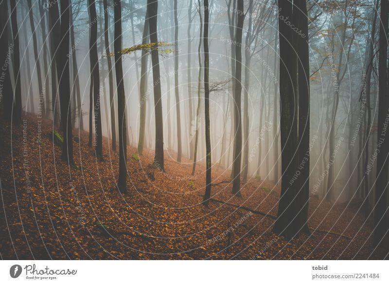 Herbstansicht Natur Landschaft Pflanze Nebel Baum Wald Hügel dunkel Einsamkeit Endzeitstimmung Baumstamm Herbstlaub Herbstfärbung Herbstwald Herbstwetter