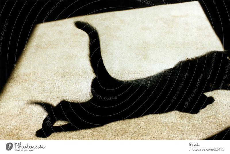 schleichender Mini-Panther Teppich Sonnenfleck Katzenbaby dehnen schwarz Licht Sonnenlicht Spielen üben beweglich Hauskatze verdunkeln Fell Haustier geschmeidig