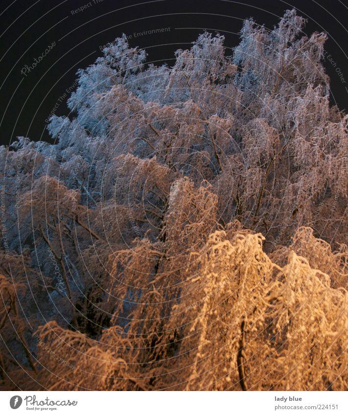 Schneemonster Umwelt Winter Eis Frost Baum gigantisch hoch kalt blau gelb weiß Kraft ruhig Vergänglichkeit Farbfoto Außenaufnahme Menschenleer Nacht