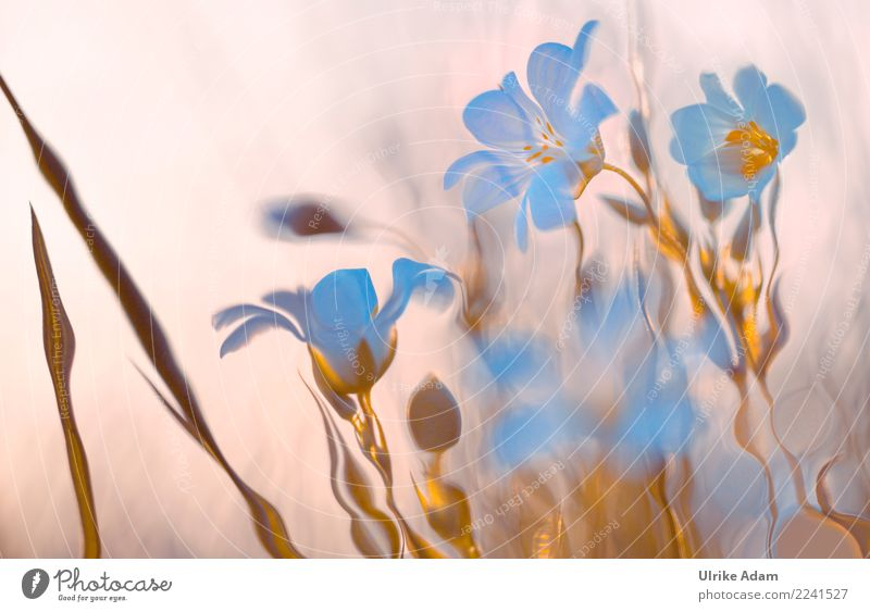 Eisblumen Natur Weihnachten & Advent Pflanze Blume Erholung Winter Wald Blüte Frühling Innenarchitektur Wiese Kunst Feste & Feiern Design Zufriedenheit leuchten