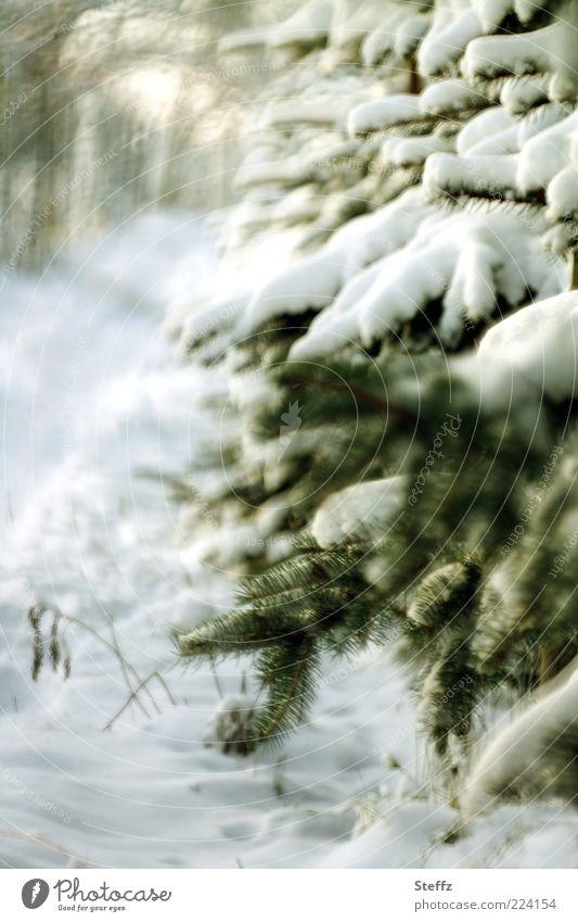 Winterstimmung Schnee Natur Baum Tanne Tannenzweig Wege & Pfade Wegrand Fußweg kalt natürlich Stimmung Wintertag Winterlicht Schneedecke Frost weiß Schneespur