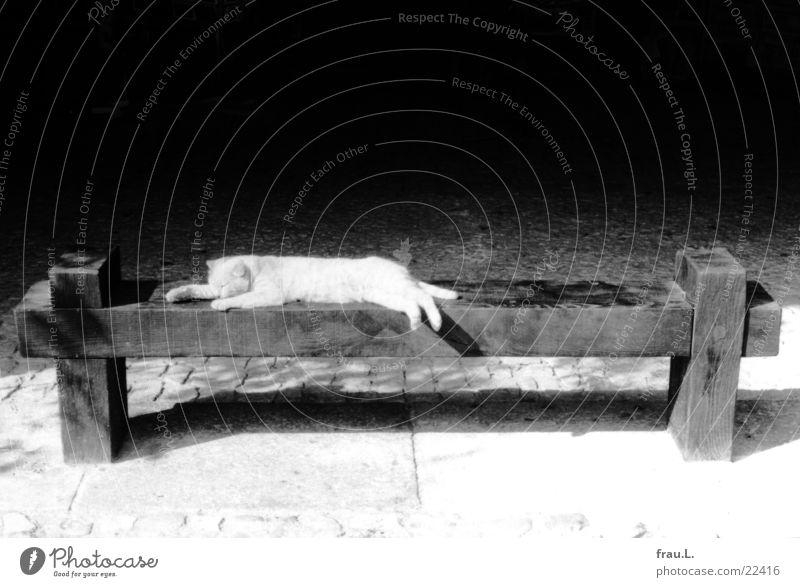 Katze, schlafend Marktplatz ausgestreckt Frankreich Mittag Süden Halbschlaf Erholung ruhen Unbekümmertheit Hauskatze Tier Säugetier getigert schafen