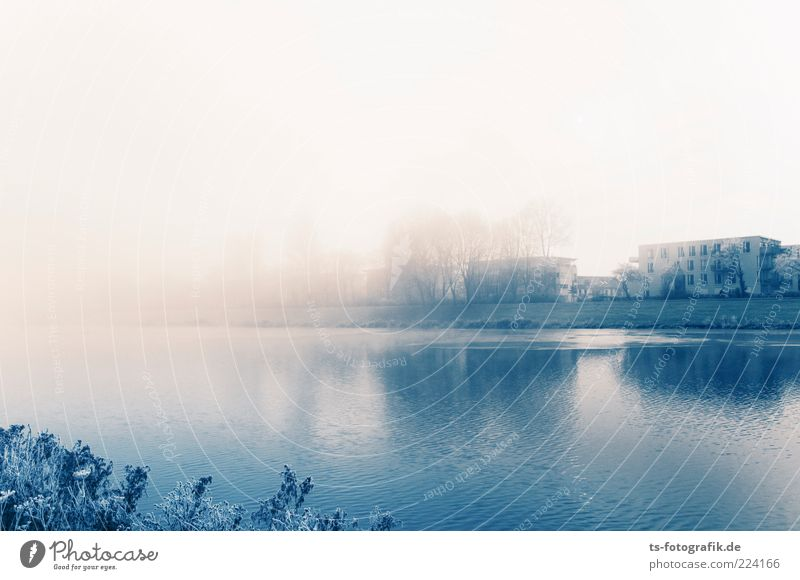 Die Nebelbank drücken Umwelt Natur Landschaft Urelemente Luft Wasser Horizont Winter schlechtes Wetter Eis Frost Baum Sträucher Seeufer Flussufer Stadtrand Haus
