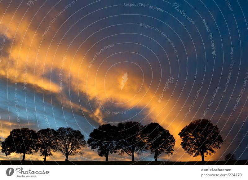 Wolkenspektakel Natur Baum blau schwarz gelb Umwelt Wetter Klima Reihe Gewitter Abenddämmerung Allee Klimawandel Gewitterwolken