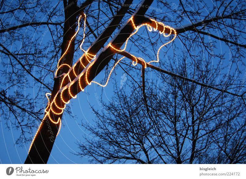 Lichterkette blau Baum Winter gelb leuchten Lichtspiel kahl Geäst Illumination Weihnachtsdekoration Lichterkette schlangenförmig laublos Lichtschlauch umschlungen Lichtdesign