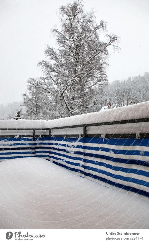 Ferien auf Balkonien Winter schlechtes Wetter Schnee Baum Haus frieren kalt blau weiß Sehnsucht Streifen ungemütlich Ast Birke Farbfoto Außenaufnahme