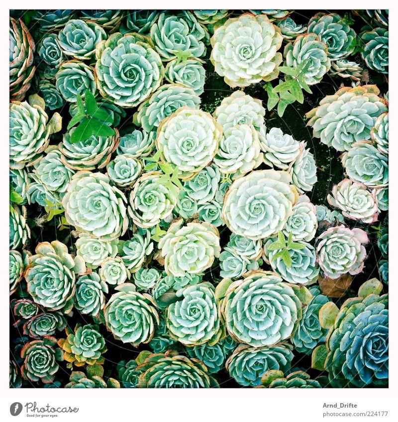 Blumen Natur Pflanze Blatt grün Farbfoto mehrfarbig Außenaufnahme Detailaufnahme Tag Vogelperspektive Blüte sehr viele Blumenbeet