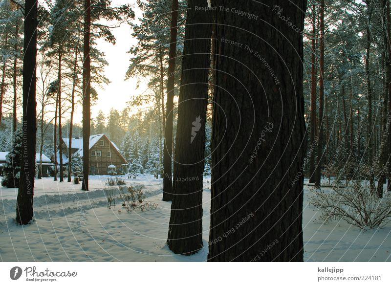 das ist das haus vom ... Natur Baum Winter Haus Wald kalt Schnee Freiheit Umwelt Landschaft Eis Wohnung natürlich Klima Lifestyle Sträucher