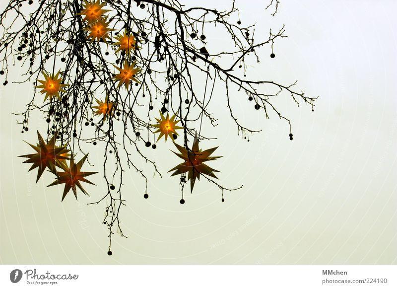 Season's Greetings ruhig Winter Dekoration & Verzierung Feste & Feiern Weihnachten & Advent Natur Himmel Stern (Symbol) Baum frieren hängen Beleuchtung Lampe