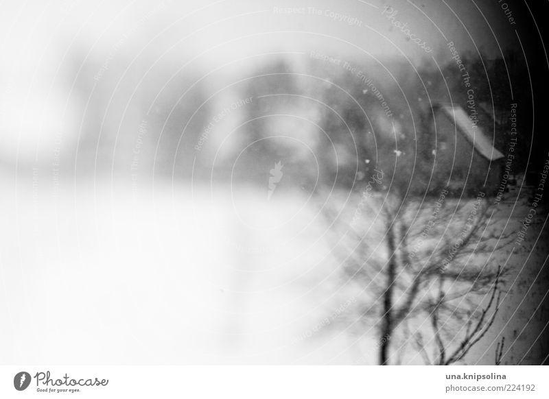 wahrnehmung Umwelt Winter Eis Frost Schnee Schneefall Baum Dorf Menschenleer Haus Gefühle Unschärfe unklar Verzerrung dunkel Zweige u. Äste Textfreiraum links