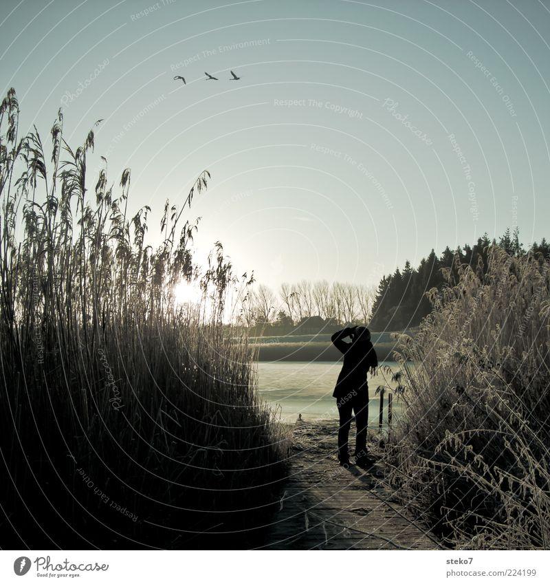 fliegen auch bei Eis und Schnee Winter Mensch 1 Landschaft Sonnenaufgang Sonnenuntergang Frost Seeufer Wildtier Gans 3 Tier beobachten frieren Freiheit kalt
