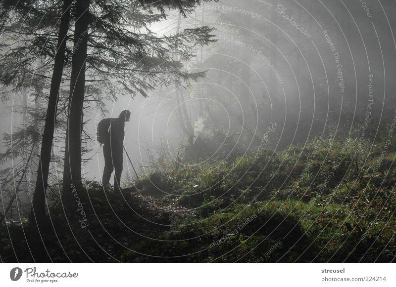 into the light Mensch Natur Ferien & Urlaub & Reisen grün Sommer Baum Landschaft ruhig Wald Berge u. Gebirge Erwachsene Leben Herbst Wege & Pfade Freiheit gehen