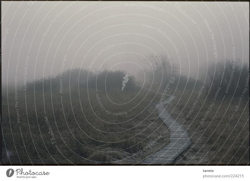 Holzweg Natur kalt dunkel Herbst grau Umwelt Nebel trist Sträucher feucht mystisch schlechtes Wetter unheimlich gekrümmt Naturschutzgebiet ungewiss