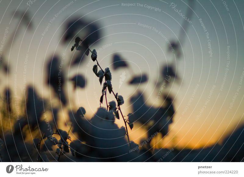 . Umwelt Natur Pflanze Himmel Sonnenaufgang Sonnenuntergang Sonnenlicht Winter Wetter Eis Frost Schnee Blatt außergewöhnlich kalt Farbe einzigartig Inspiration