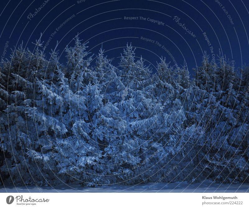 Weihnachtlich glänzet der Wald.... Himmel weiß Baum blau Winter ruhig Schnee Eis Frost silber Nachthimmel Raureif Natur Fichte Nachtaufnahme