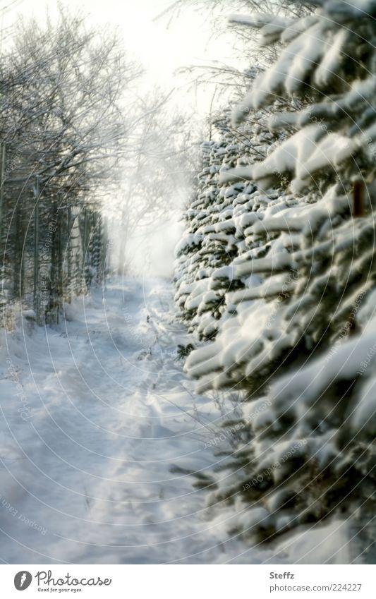 Winternebel Natur Baum kalt Schnee Wege & Pfade Wetter Nebel Zukunft Fußweg Ziel Zweig Tanne Tannenzweig Winterstimmung Zielvorstellung