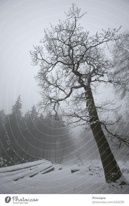 Stille im winterlichen Wald ruhig Winter Schnee Landwirtschaft Forstwirtschaft Umwelt Landschaft Nebel Baum Wege & Pfade kalt natürlich Natur Stimmung