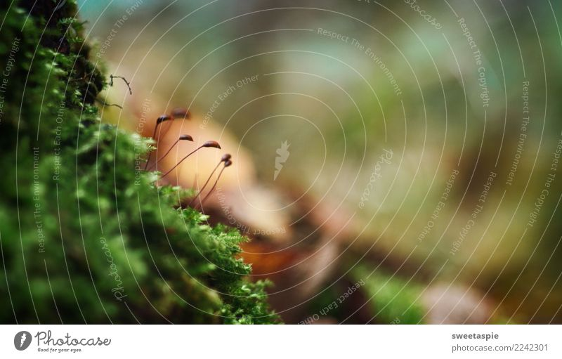 Moos-linge! Natur grün Erholung Einsamkeit ruhig Wald dunkel Herbst Bewegung braun Zusammensein Freizeit & Hobby Zufriedenheit wandern Erde Wachstum