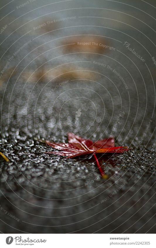 RotSchild zeigt Dir den Weg aus dem Park. Natur Farbe Baum Einsamkeit Blatt Traurigkeit Tod Kreativität Lebensfreude einzigartig Beton Trauer Kitsch Schmerz