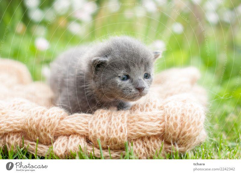 Graue Katze Freude schön Spielen Garten Baby Natur Tier Gras Pelzmantel Haustier klein lustig niedlich grün schwarz weiß Katzenbaby reizvoll Tabby Hintergrund
