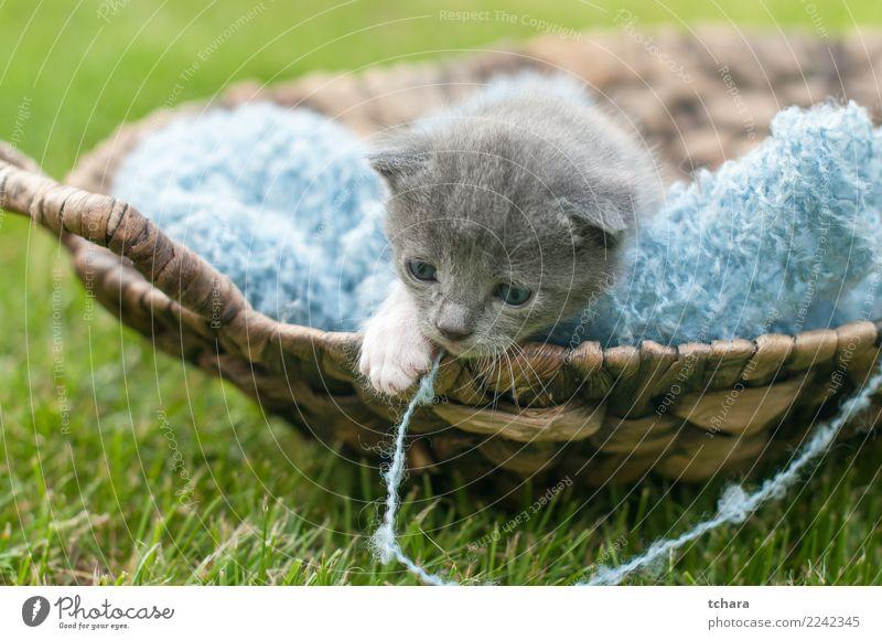 Kitty Freude schön Spielen Garten Baby Natur Tier Gras Pelzmantel Haustier Katze klein lustig niedlich grau grün schwarz weiß Katzenbaby reizvoll Tabby