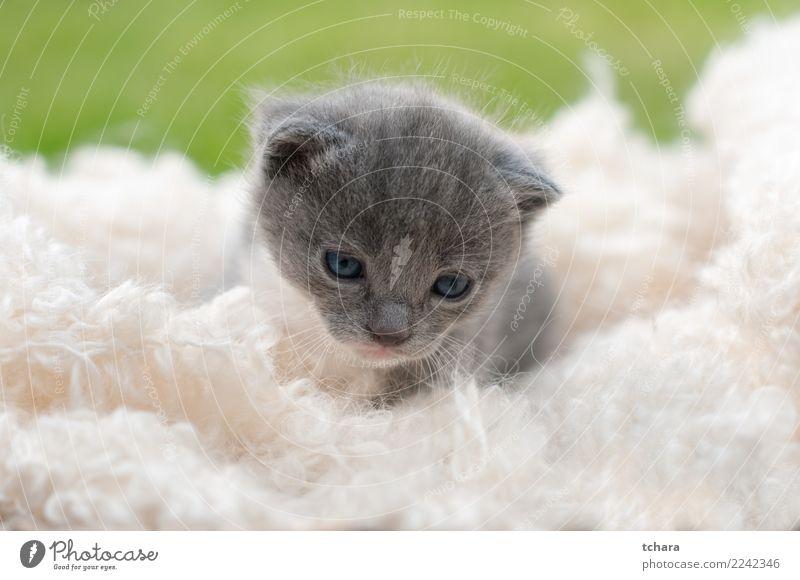 Kitty Freude schön Spielen Garten Baby Natur Tier Gras Pelzmantel Haustier Katze klein lustig niedlich grün schwarz weiß Katzenbaby reizvoll Tabby Hintergrund