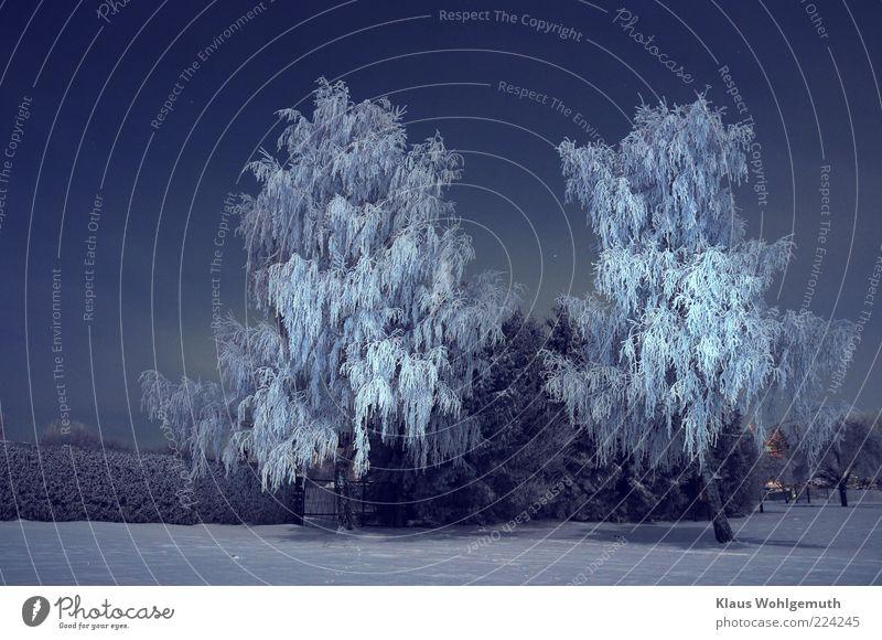 Torwächter Winter Schnee Umwelt Nachthimmel Stern Eis Frost Baum Menschenleer frieren blau silber weiß Einsamkeit Raureif ruhig Schneelandschaft falsch