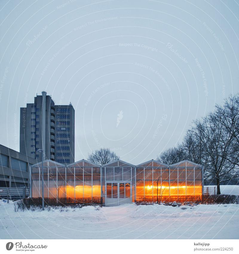 klimahaus Winter Haus kalt Schnee Wärme Glas Hochhaus Klima Wachstum Wissenschaften leuchten erleuchten Versuch Gebäude Labor Gartenarbeit