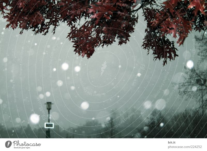 Schneegestöber II Umwelt Natur Himmel Winter Klima Klimawandel Wetter schlechtes Wetter Schneefall Baum Blatt Park dunkel kalt grau Laterne Laternenpfahl
