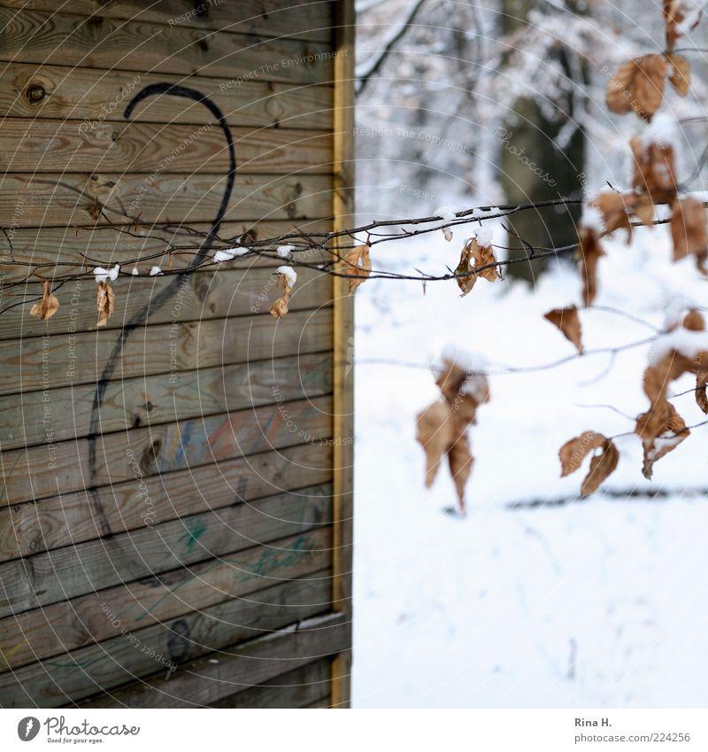 Touché Umwelt Natur Winter Blatt kalt Ast Hütte Holzhütte Fragezeichen Fragen Verbindung Menschenleer Schwache Tiefenschärfe Stacheldraht welk Buchenblatt
